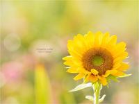 vitamin color:[微笑む♬] 其の7 END - 君に届け