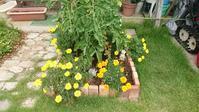 ミニポタジェのその後と秋の庭 - 今から・花