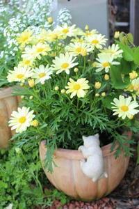 ダチョウ倶楽部なみの熱湯風呂 - HOME SWEET HOME ペコリの庭 *