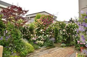 薔薇の庭 6月後半の庭風景 - カヲリノニワ