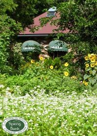そば畑が、花満開で綺麗です~~。 - 乗鞍高原カフェ&バー スプリングバンクの日記②