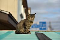 灯台猫たち2018.08.03/2018.08.10 - ちわりくんのありふれた毎日II