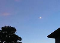 月火(水はなくて)木金土 - マリカの野草画帖