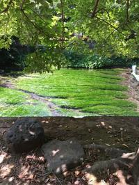 念願叶って三島市の湧水群 - K+Y アトリエ一級建築士事務Blog