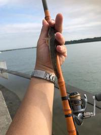 2018年8月13日 スマホを新しくしたら… - 東京湾奥釣り Level1