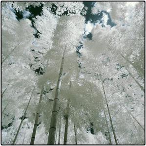 竹林 - コバチャンのBLOG