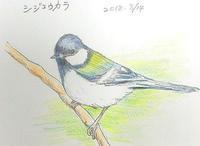 シジュウカラ・・・色鉛筆画 - 浅川野鳥散歩