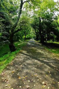静かな公園で朝散歩です - ぶらり散歩 ~四季折々フォト日記~
