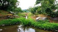 涼しく鑑賞 - 金沢犀川温泉 川端の湯宿「滝亭」BLOG