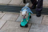 スケボーに乗った犬 - あだっちゃんの花鳥風月