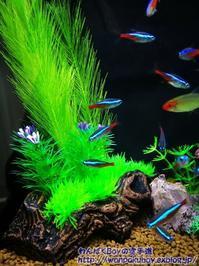 熱帯魚・・・ - わんぱくBoyの空手道