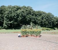 Tiny Sunflower field. - 相模原・町田エリアの写真サークル「なちゅフォト」ブログ!