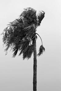 palm tree on the beach against the southern wind... - 心のカメラ   more tomorrow than today ...