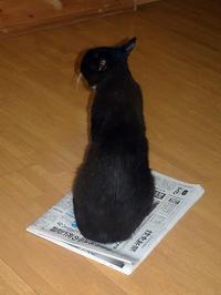 何かの上でさえあれば良い! - ネコと裏山日記