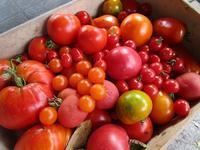 オレンジ色のミラベルが赤いトマトになりました - フランス Bons vivants des marais