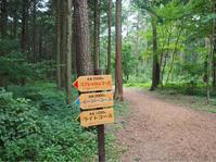 18年8月15日 森林散策! - 旅行犬 さくら 桃子 あんず 日記