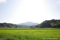 田舎 - Noriko's Photo  -light & shadow-