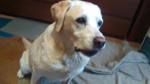 愛犬のインスリノーマで悩まれている方へ -