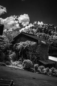 山間の壁面緑化住宅 - Silver Oblivion