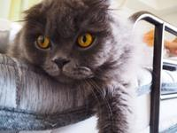 猫ちぐら - sobu 2