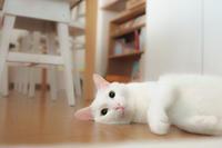 久しぶりにお昼寝 - Omoブログ