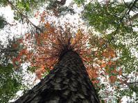清里の森を味わう一泊二日のプログラムのご案内 - Forestvita vivo vita..