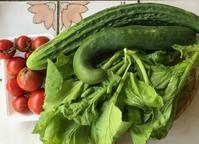 頂き物の自家製野菜  ♪四葉胡瓜、トマト、からし菜♪ - やせっぽちソプラノのキッチン2