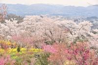 福島、飯坂温泉、三春の旅 - 僕の足跡