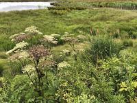 8月15日 八島湿原① - 雑木林の家から-nishio