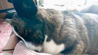 寝顔もかわゆい~(╹◡╹)♡ - アロマセラピー☆ホーリーフ アロマ&クリスタルセラピー サロン&スクール ++癒しの森から ++
