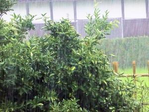 久しぶりの雨 -
