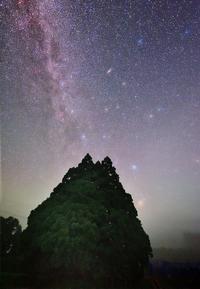 トトロの夜遊び - 四季星彩