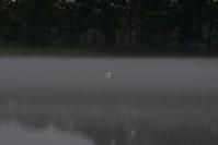 雨ばかり・・・ 今週のウトナイ湖 - やぁやぁ。