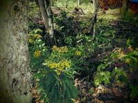 野草の美しさに思う - 福島県南会津での山暮らしと制作(陶芸、木工)