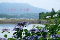 恋し野のあじさい園 - 日本全国くるま旅