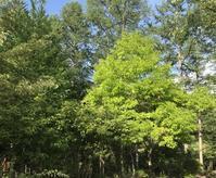 森の中で瞑想 - 神様日記