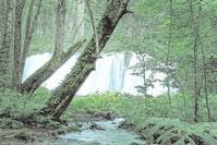 夏の奥入瀬渓流 8 - 光 塗人 の デジタル フォト グラフィック アート (DIGITAL PHOTOGRAPHIC ARTWORKS)