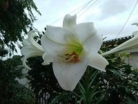 季節の花 - 趣味の部屋0074