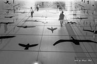 Bird street - Berry's Bird