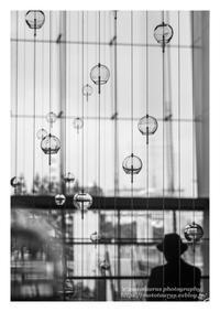 風簾 - ♉ mototaurus photography