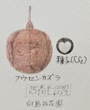 スケッチ感察ノート (Nature journal)