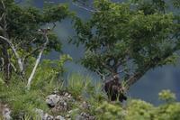 カケスのアタック - 野鳥フレンド  撮り日記