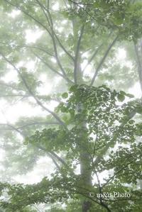 霧に煙る - 季節のおくりもの