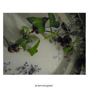 山芋の子供(むかご)/art farm & gardenの庭 - アート農場と庭