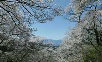 上伊那の桜 - 写真巡礼「日本の風景」