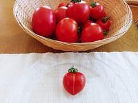 ハート形のトマト&スイカが大きくなりました☆ - コテージ便り