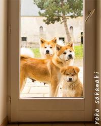 親子3匹で - ノルマン犬猫日記