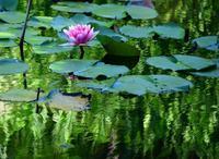 小さな池の風景 - 写真でイスラーム