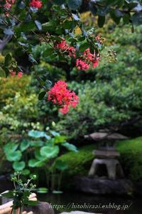 鎌倉長谷寺百日紅 - 暮らしを紡ぐ