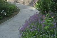 8月の庭・お盆のあと - 山庭居 ~庭に居ます~